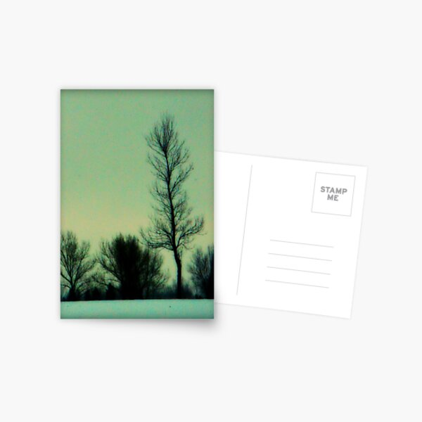 Trees and First Snow Postcard