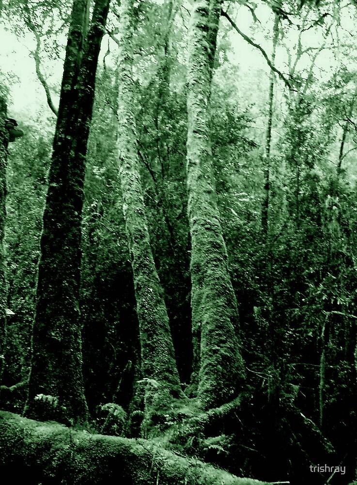 Warners Landing Ancient Tree - Gordon River SW Tasmania by trishray