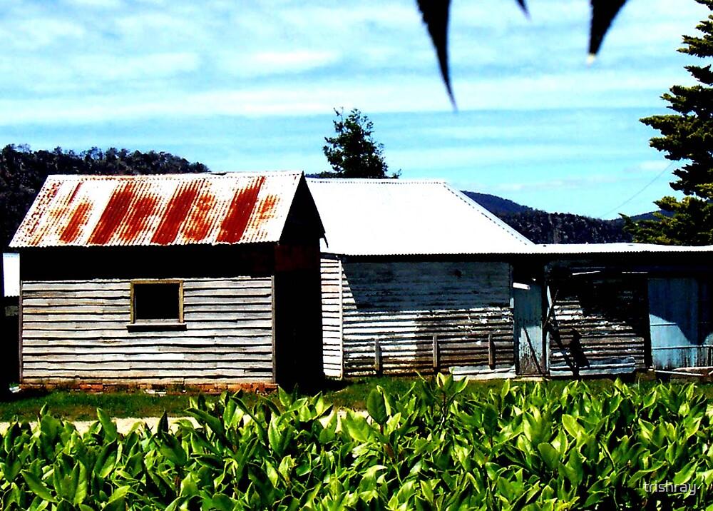 Old farm buildings by trishray