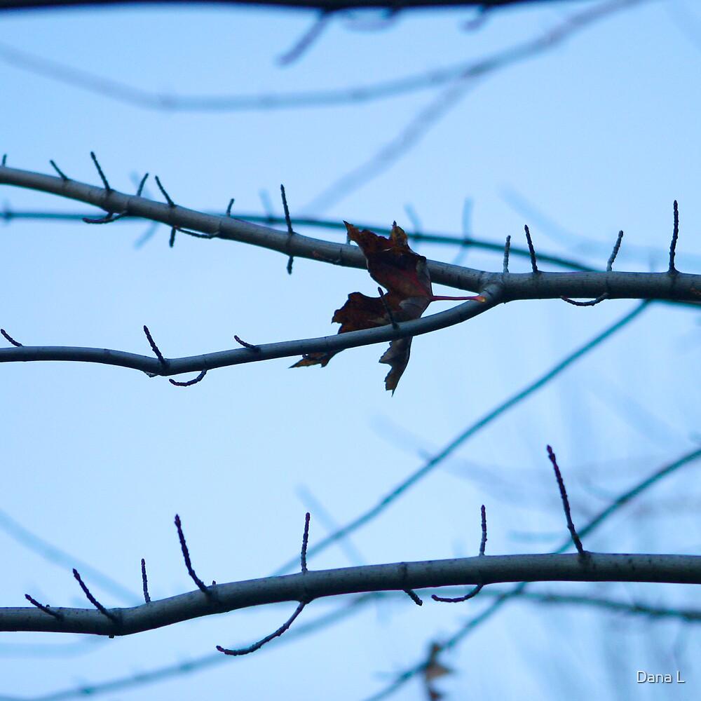 Branch by Dana L