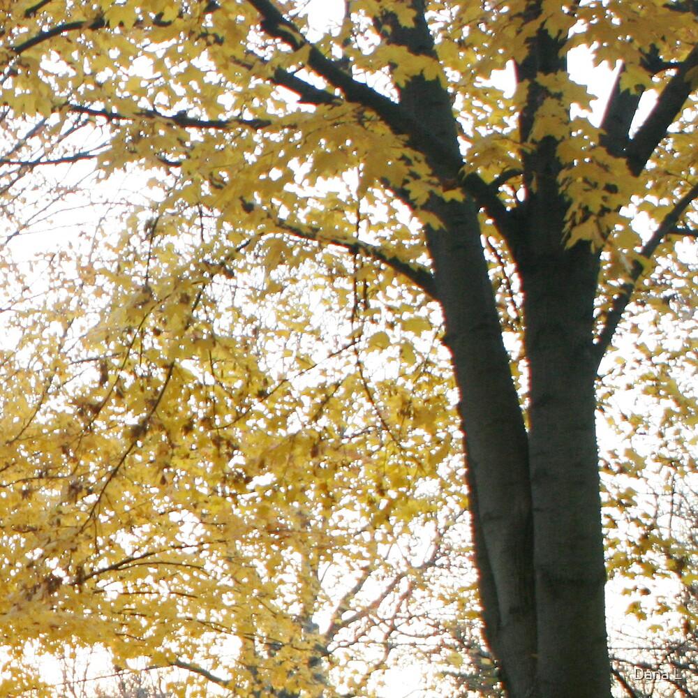 Tree II by Dana L