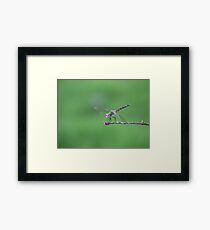 Drinking In The Green Framed Print
