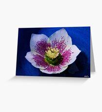 Hellebore Flower Head Greeting Card