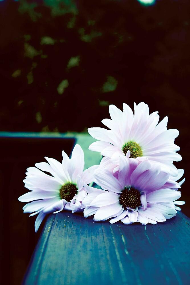 daisies (#2) by Kris Z