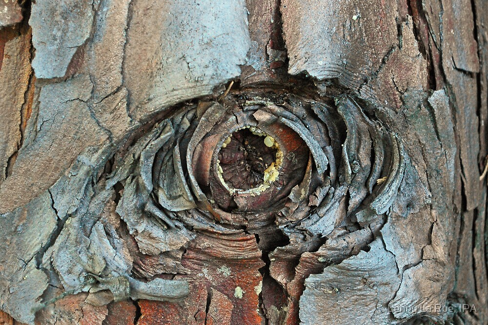 eye of the cedar 1: Face-to-Ent face by Lenny La Rue, IPA