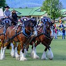 Clydesdales at Whittlesea Show by Pauline Tims