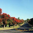 Ficifolia trees, Princes Way, Drouin. by Bev Pascoe