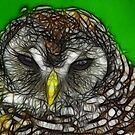 Owl by Trevor Kersley