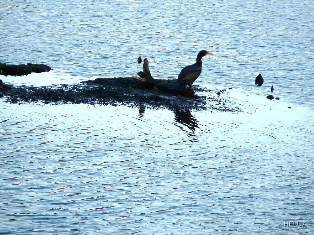 Cormorant Visitor by HELUA