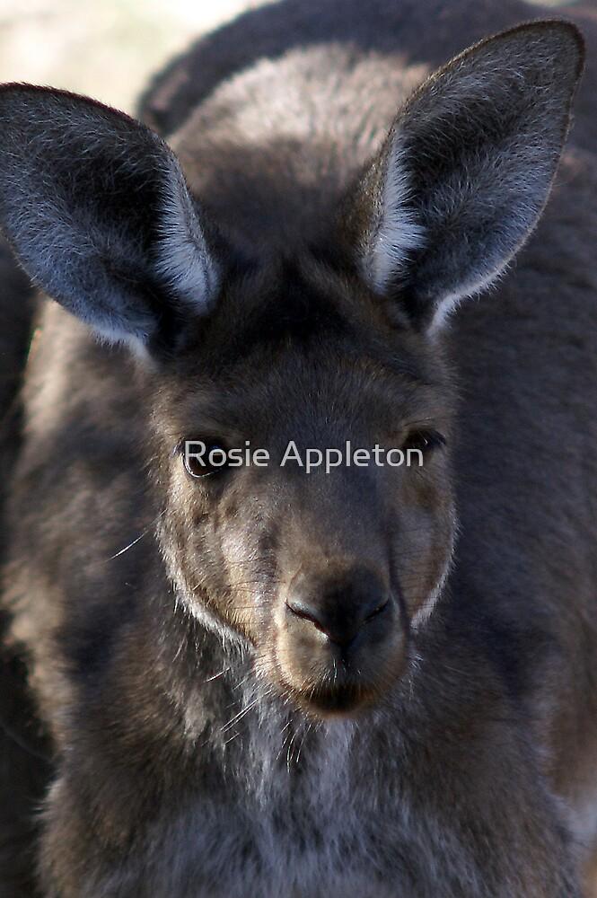 Little 'Roo by Rosie Appleton