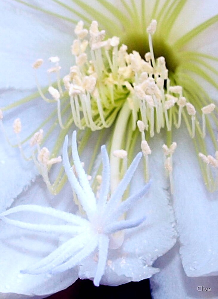 Heart of the Cactus Flower by Clive