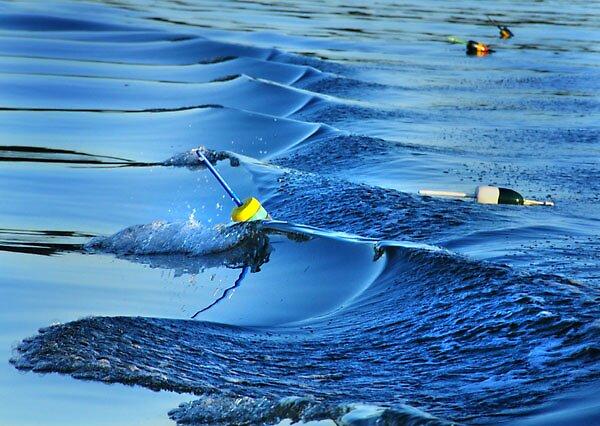 Surfing Buoys by dbadanbet