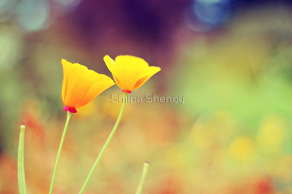In love by Shilpa Shenoy
