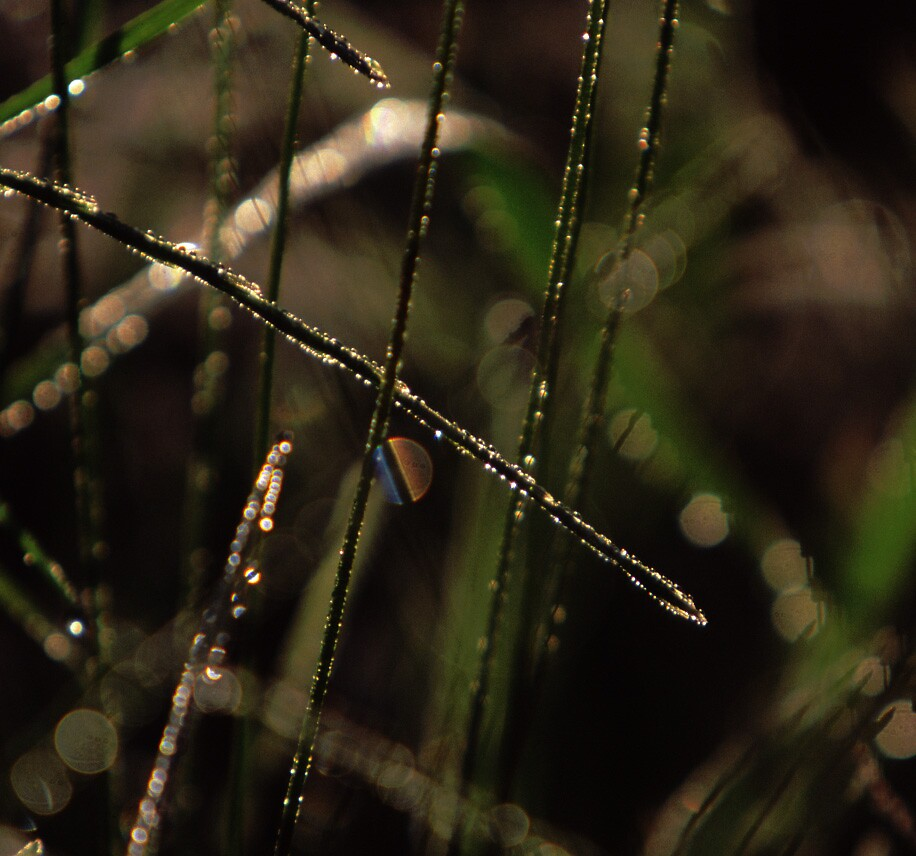 Spectral Dew by John Brumfield