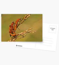 Soldier Beetles Postcards