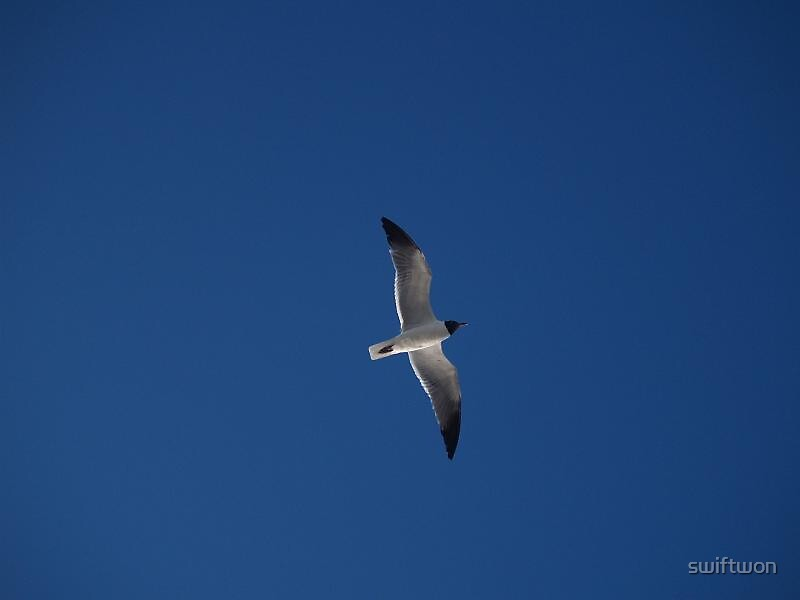 Lonesome Seagull by swiftwon