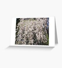 Cascade Of Blossoms Greeting Card