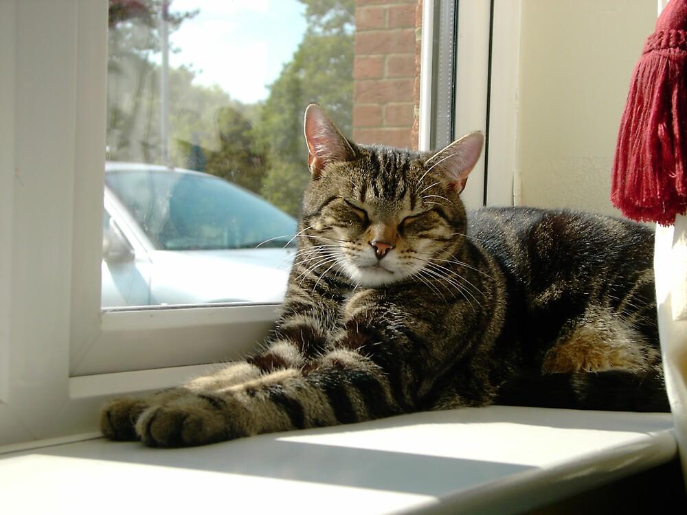Rudi sunbathing. by NotTinyTim
