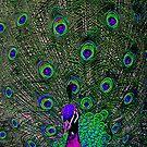 Peacockrama by rogala888