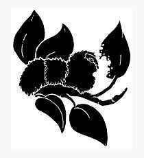 Caterpillar Breakfast - Black Photographic Print