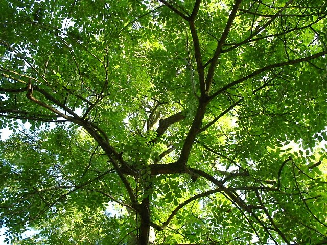 Trees  by NotTinyTim