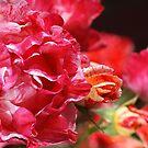 Happy Rose Family Display by Joy Watson