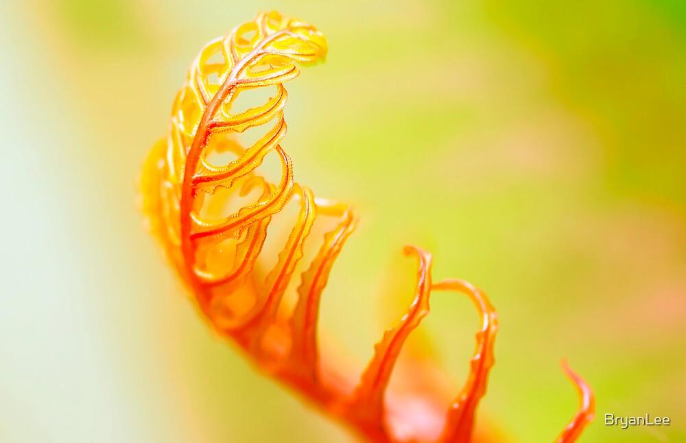 Twirl  by BryanLee