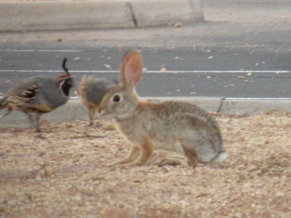 Rabbit and quails making friends by Bonnie Pelton