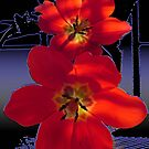 Red flowers by Gayle Bell