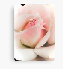 Blushing Pink  Metal Print