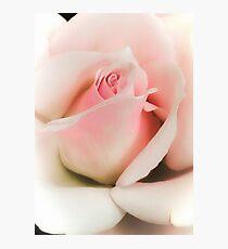 Blushing Pink  Photographic Print