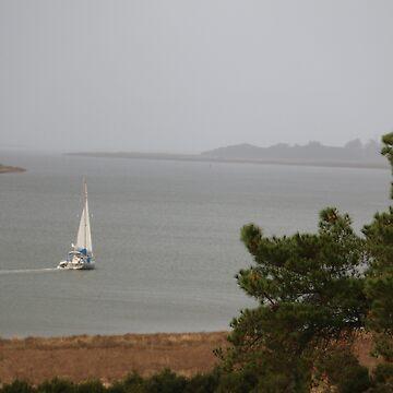 Sailing into Launceston - Tasmania by varmifsud