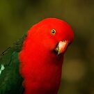 Australian King Parrot (male) by theleastone