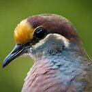 Common Bronzewing profile by theleastone