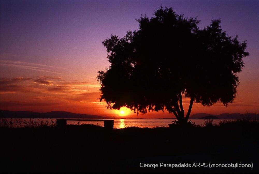 Stillness and strength by George Parapadakis ARPS (monocotylidono)