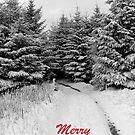 A Winter Walk by Steven McEwan