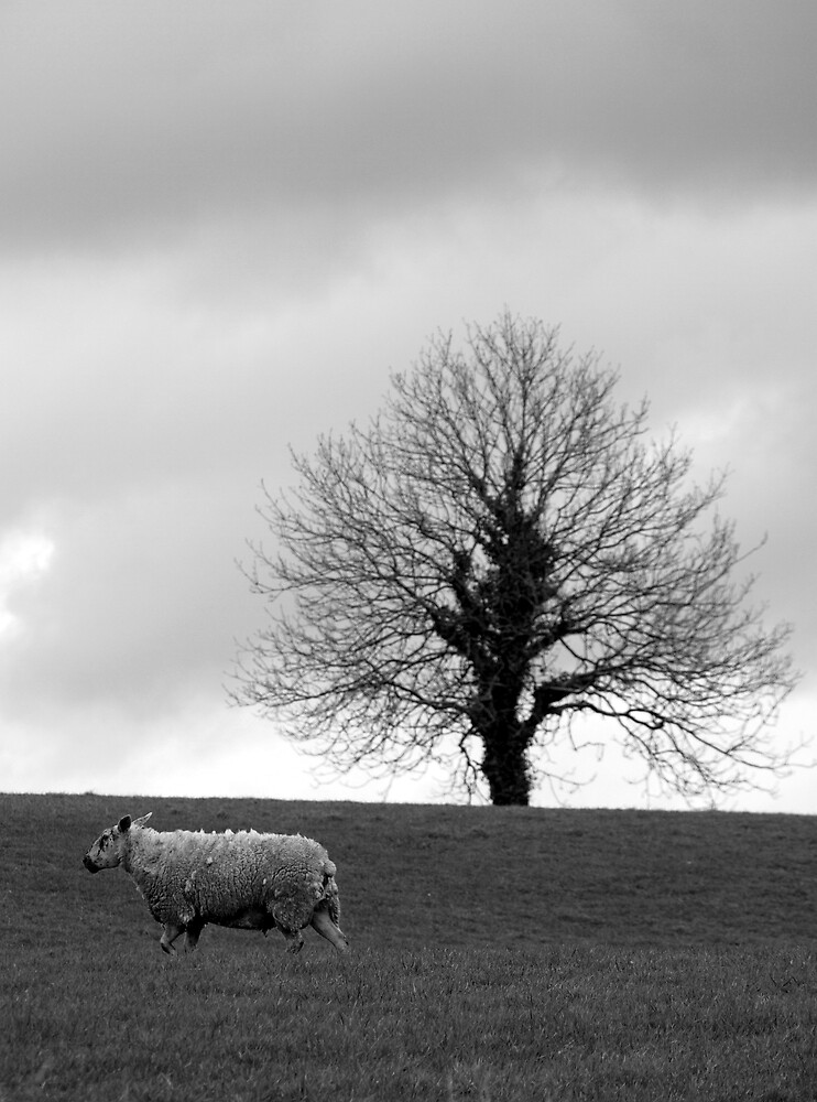 Sheep and Tree by feldore