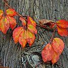 Last leaves by jerry  alcantara
