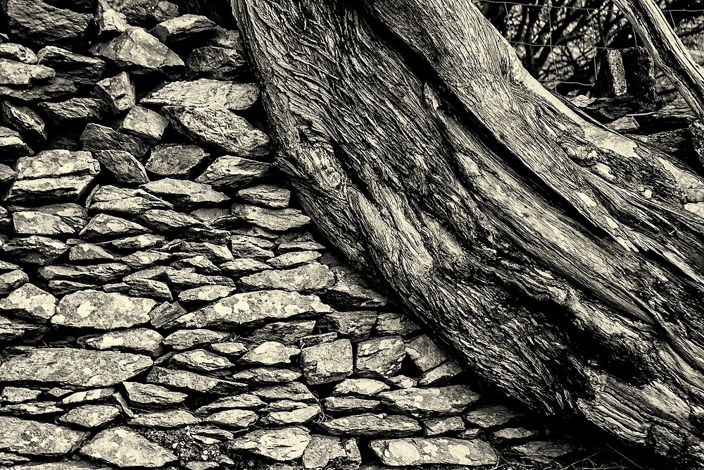 Twisted Tree. by Dave Hare