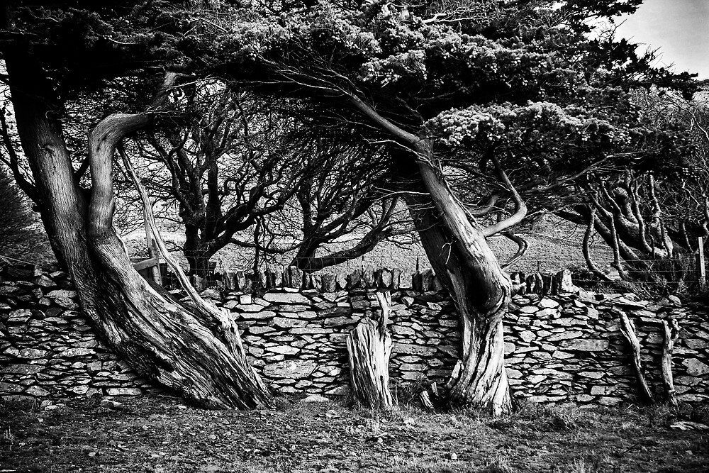 Old wood and stone by Dave Hare