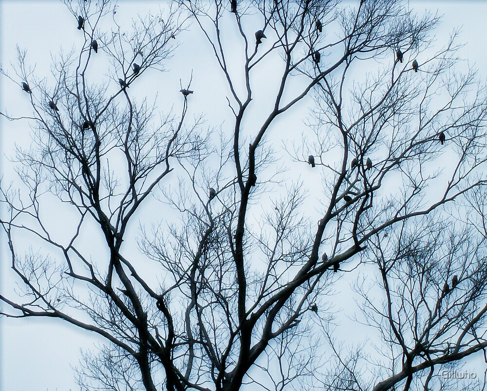 Blackbirds In A Tree by Gillwho