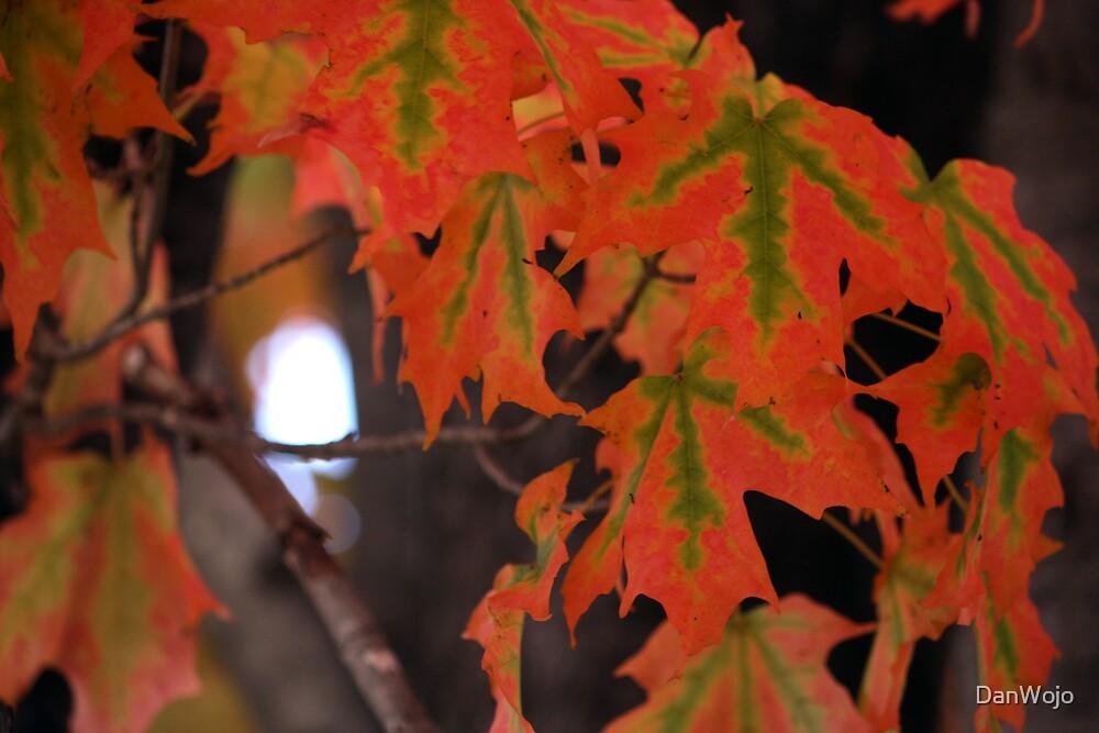 Maple Vains by DanWojo