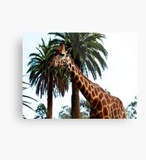 Funny Giraffe Poking Out Her Tongue, Metal Print