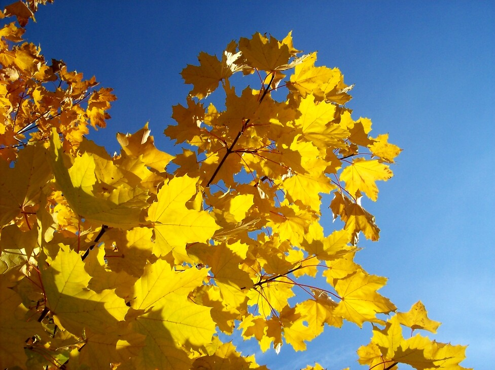 Fall color 2 by Jimmy Joe