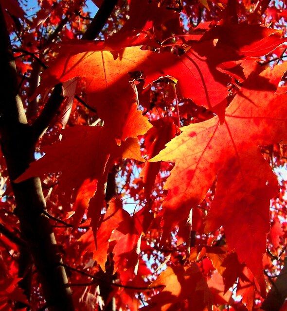 Fall color 4 by Jimmy Joe