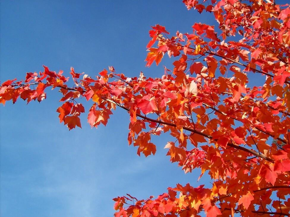 Fall color 5 by Jimmy Joe