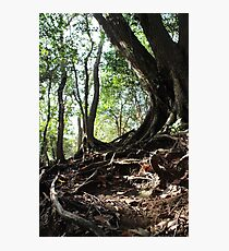 Tangle Photographic Print