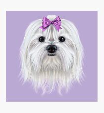 Illustrated Portrait of Maltese Dog Photographic Print
