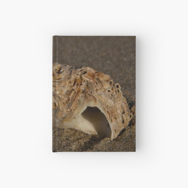 Weathered Whelk on Fahan Beach Hardcover Journal