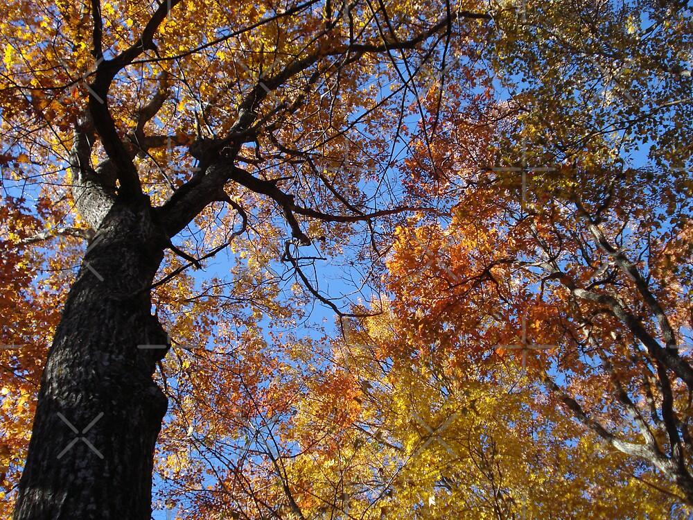 Bright Fall Canopy by JRobinWhitley